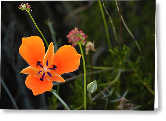 Greeting Card featuring the photograph Desert Flower 3 by Penny Lisowski