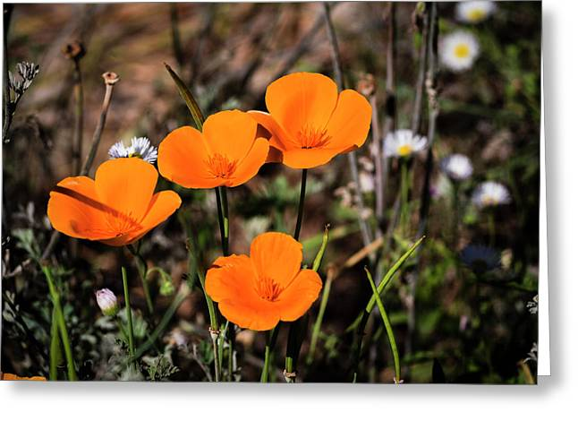 Greeting Card featuring the photograph Desert Flowers Four Flowers Four by Penny Lisowski