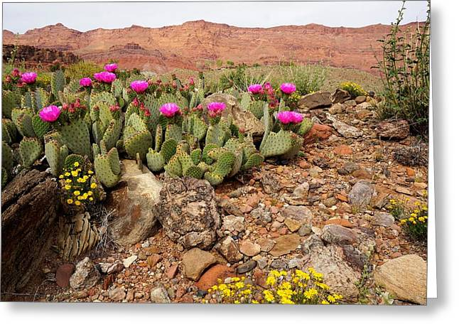Desert Cactus In Bloom Greeting Card