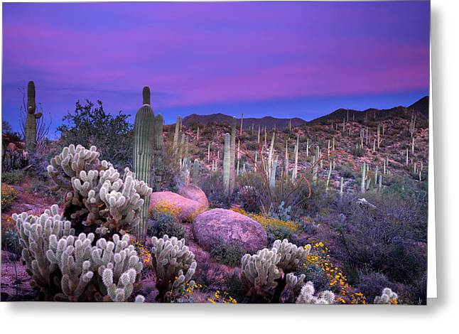 Desert Garden Greeting Card by Eric Foltz