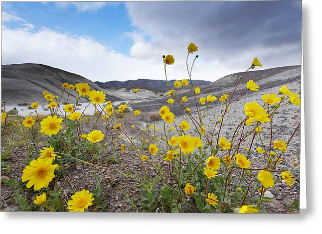 Greeting Card featuring the photograph Desert Gold In Death Valley by Dung Ma