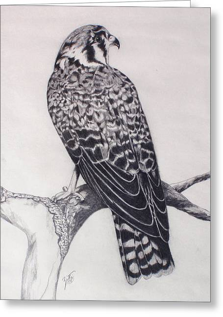 Desert Hawk II Greeting Card