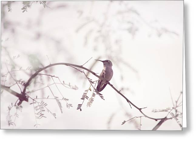Desert Hummingbird II Greeting Card by Carolina Liechtenstein