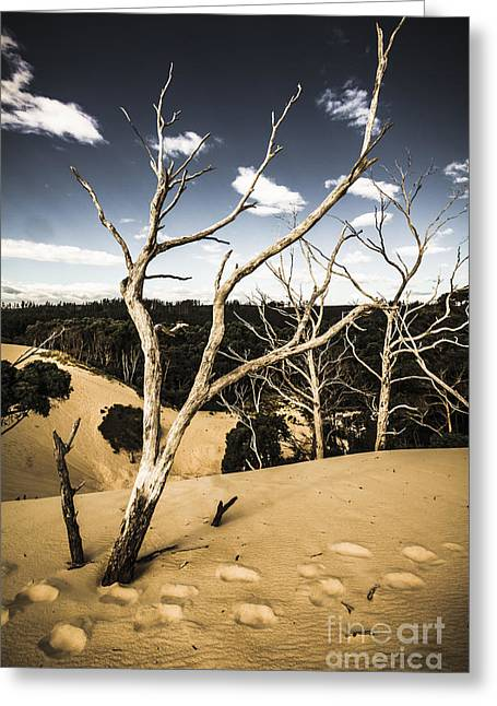 Desert In The Middle Of The Woods Greeting Card by Jorgo Photography - Wall Art Gallery