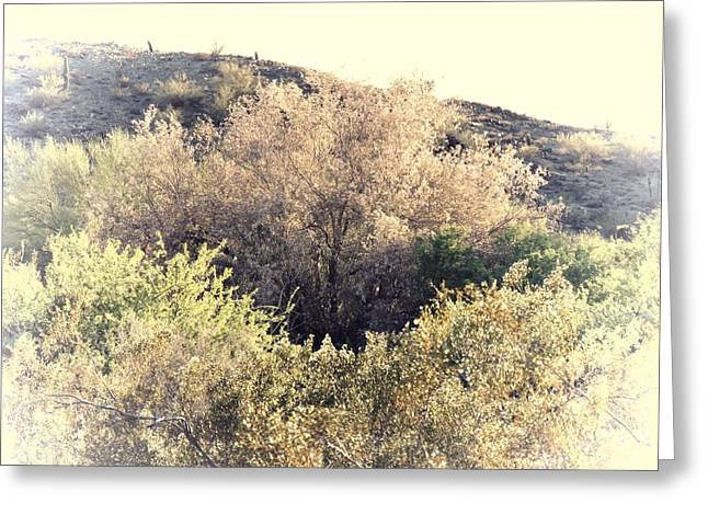 Desert Ironwood Afternoon Greeting Card