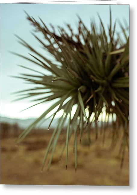 Desert Leaves Greeting Card