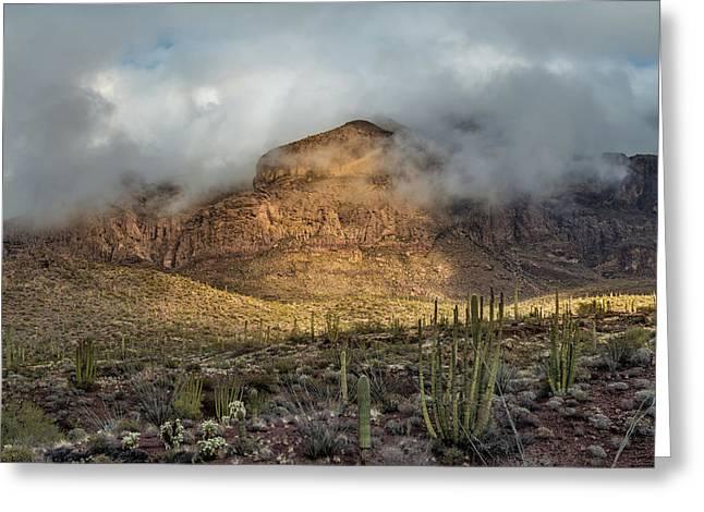 Desert Morning Greeting Card