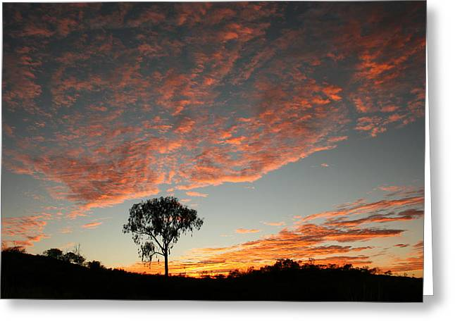 Greeting Card featuring the photograph Desert Oak Tree Silhouetted At Sunrise by Keiran Lusk
