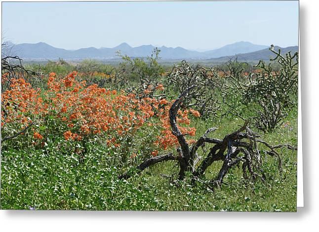 Desert Orange Greeting Card
