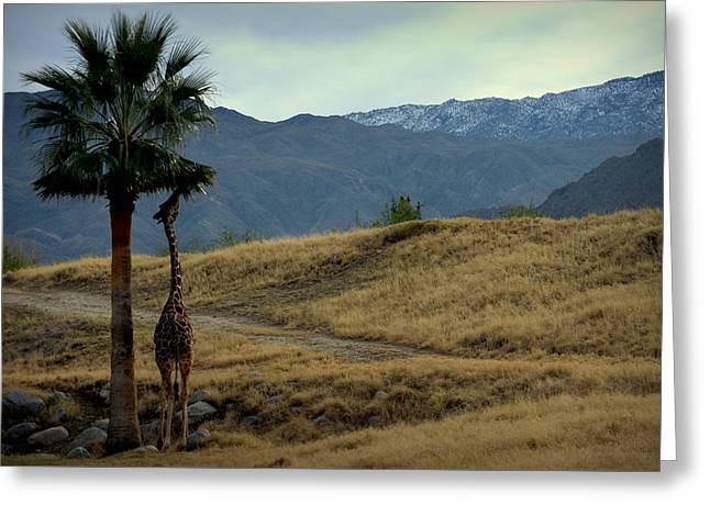 Desert Palm Giraffe 001 Greeting Card