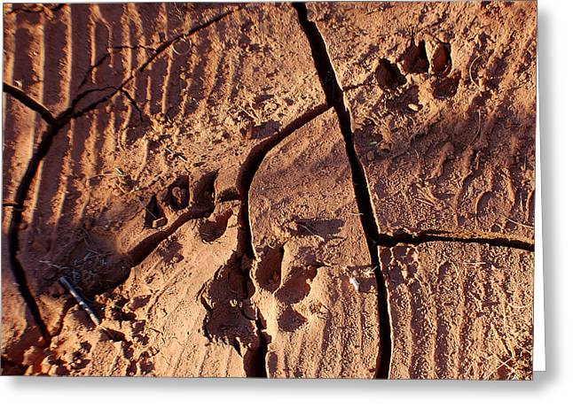 Desert Paw Prints Greeting Card