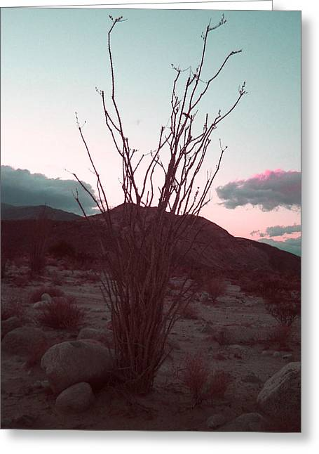 Desert Plant And Sunset Greeting Card by Naxart Studio