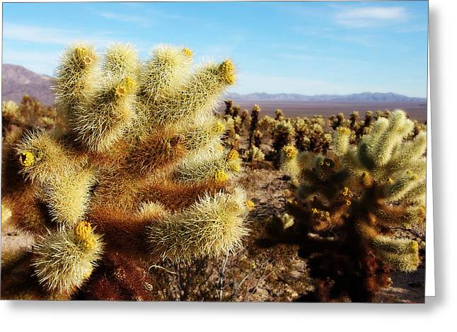 Greeting Card featuring the photograph Desert Plants - Porcupine Cholla by Glenn McCarthy