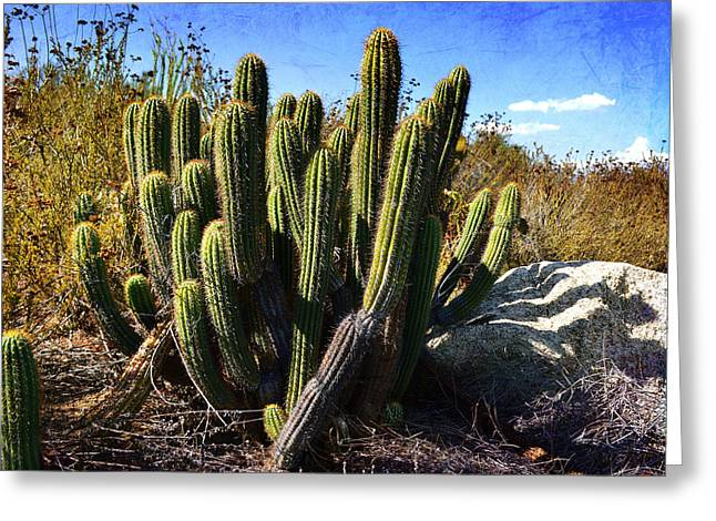 Greeting Card featuring the photograph Desert Plants - The Wild Bunch by Glenn McCarthy