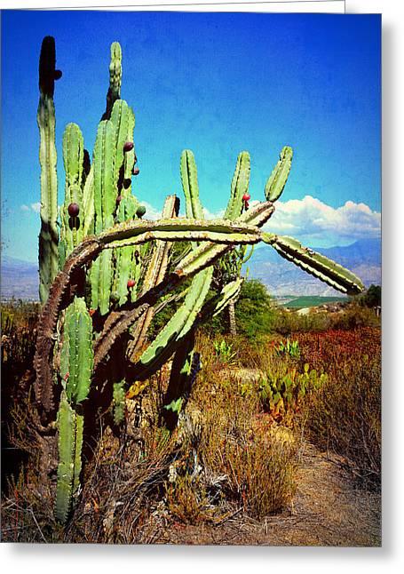 Greeting Card featuring the photograph Desert Plants - Westward Ho by Glenn McCarthy