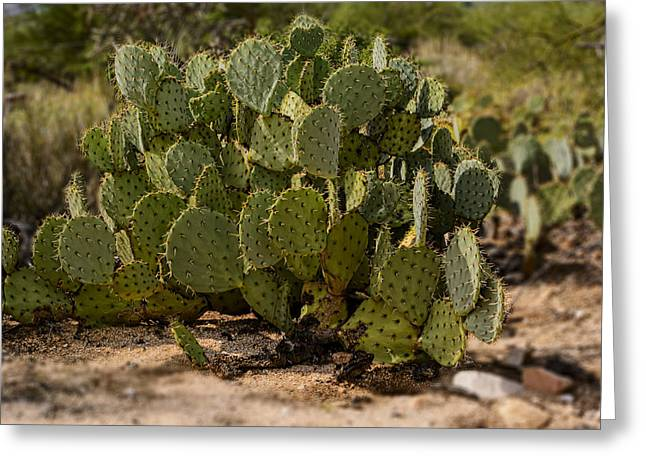 Desert Prickly-pear No6 Greeting Card