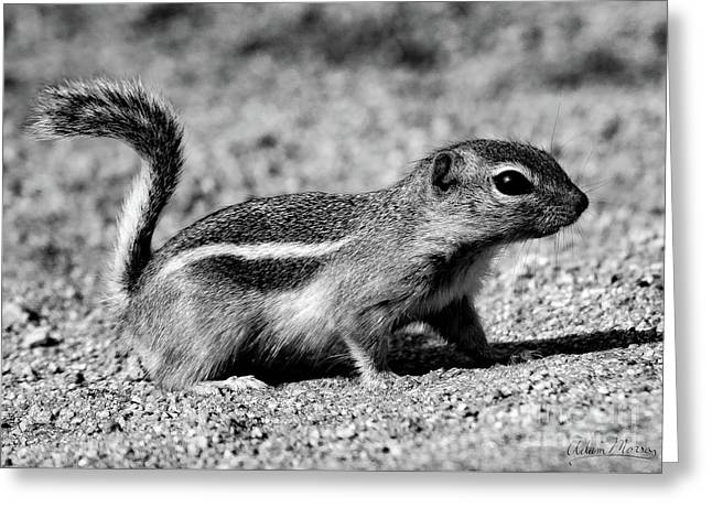Scavenger, Black And White Greeting Card