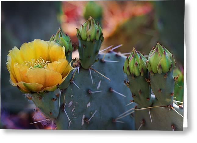 Desert Spring Greeting Card by Gary Yost