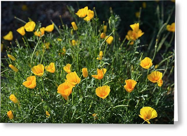 Desert Spring Greeting Card by Lucinda Walter