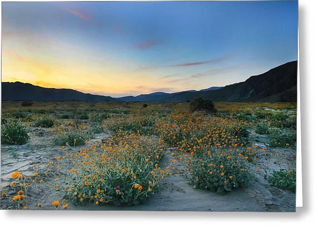 Desert Sunflower Sunset Greeting Card by Scott Cunningham