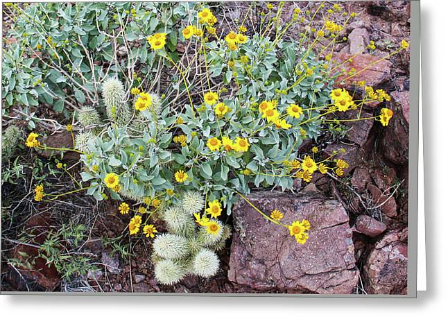 Teddybear Cactus Bouquet Greeting Card