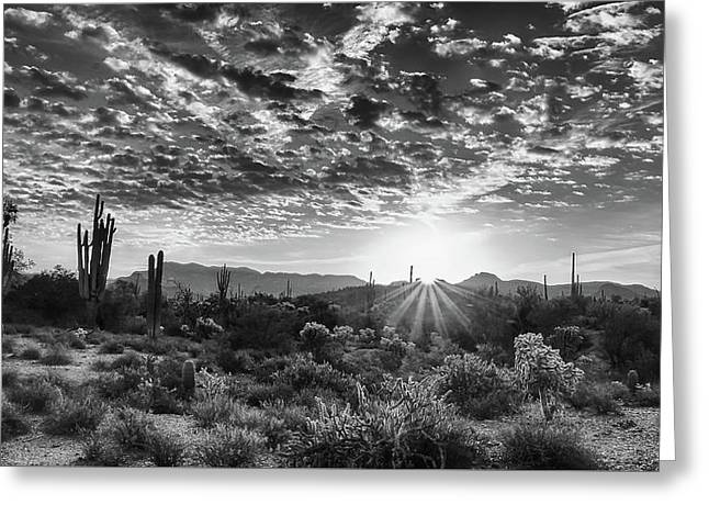 Greeting Card featuring the photograph Desert Sunrise by Monte Stevens