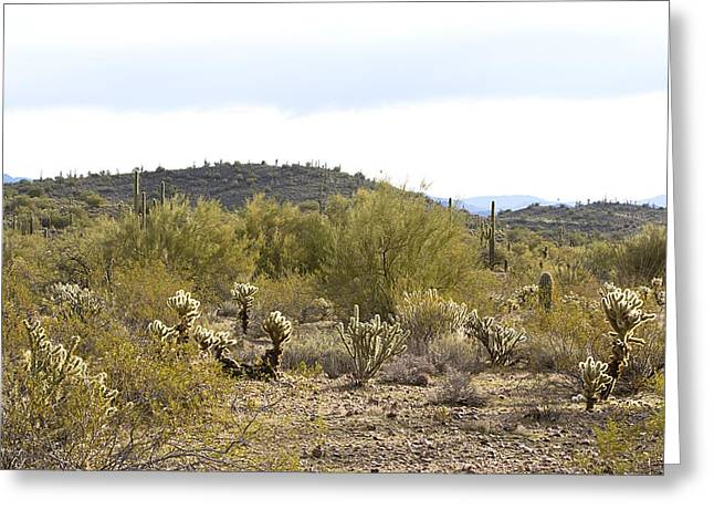 Greeting Card featuring the photograph Desert Sunrise by Phyllis Denton
