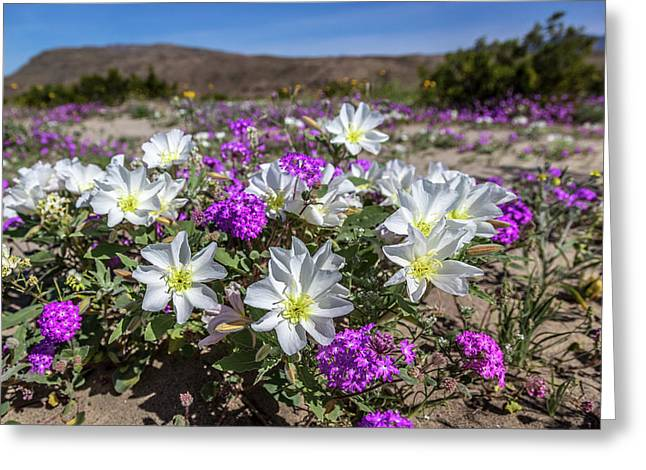Desert Super Bloom 2017 Greeting Card by Peter Tellone