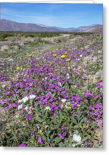 Greeting Card featuring the photograph Desert Super Bloom by Peter Tellone