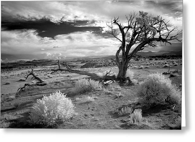 Desert Tree Greeting Card by G Wigler