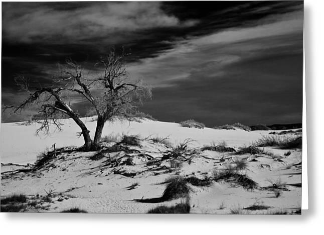 Ralf Kaiser Greeting Cards - desert tree in White Sands bw Greeting Card by Ralf Kaiser