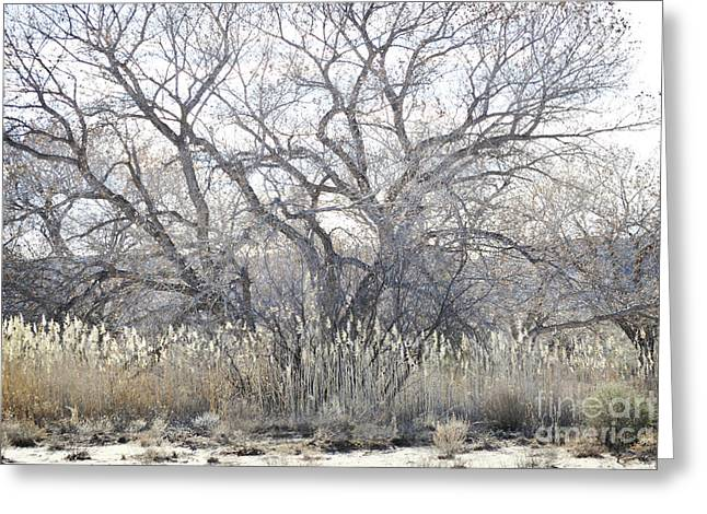 Greeting Card featuring the photograph Desert Tree Willows by Andrea Hazel Ihlefeld