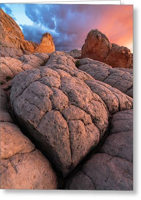 Desert Turtle Greeting Card
