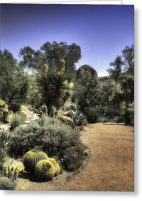 Greeting Card featuring the photograph Desert Walkway by Lynn Geoffroy