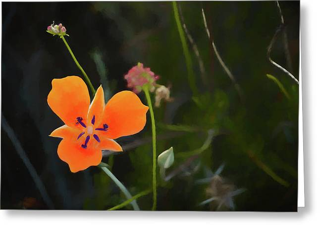 Greeting Card featuring the photograph Desert Wildflower 2 by Penny Lisowski