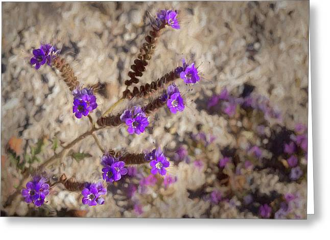 Greeting Card featuring the photograph Desert Zig Zag Purple Flower by Penny Lisowski