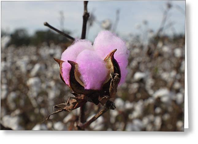 Designer Cotton Greeting Card by Rick McKinney