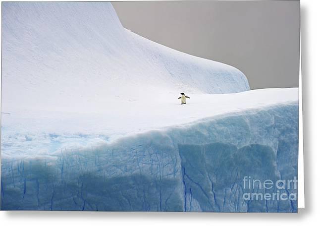 Desolation... Greeting Card by Nina Stavlund