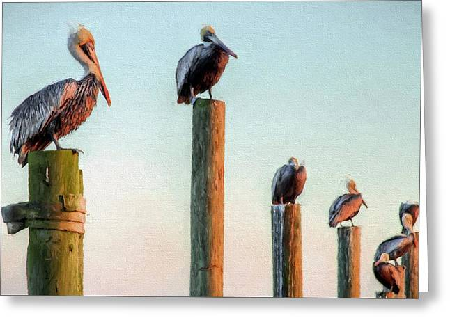 Destin Pelicans-the Peanut Gallery Greeting Card