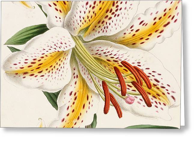 Detail Of A Lily Greeting Card