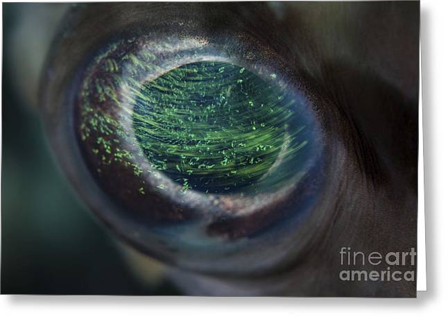 Detail Of The Eye Of A Porcupinefish Greeting Card