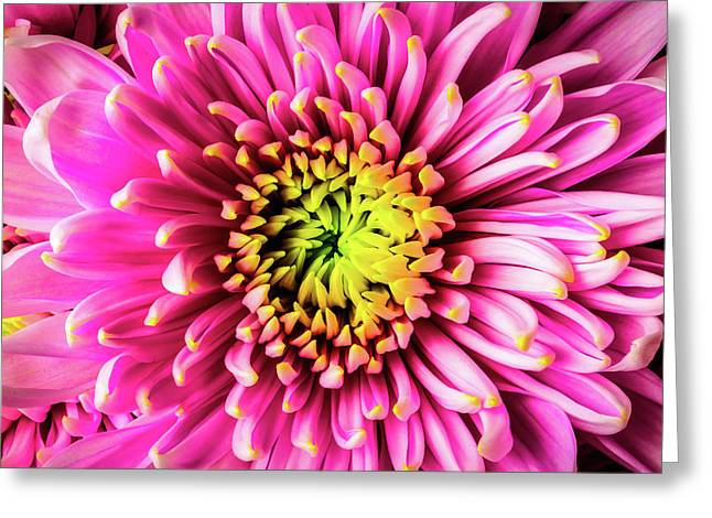 Detail Pink Spider Mum Greeting Card