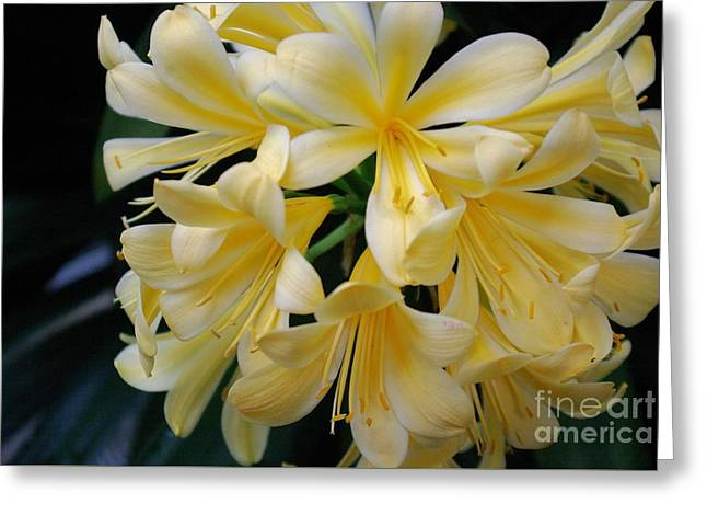 Details In Yellow And White Greeting Card by John S