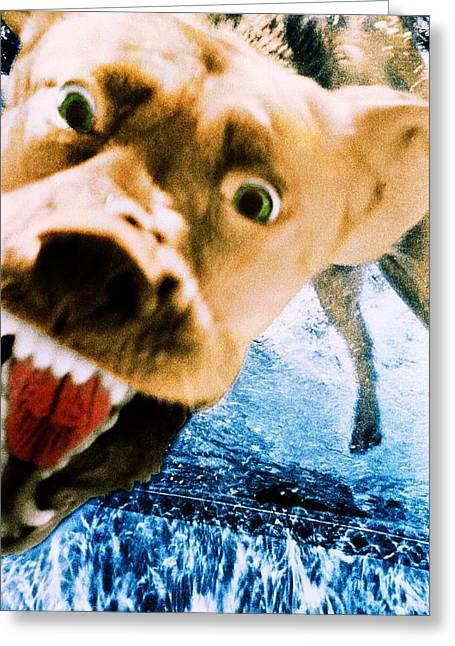 Devil Dog Underwater Greeting Card by Jill Reger