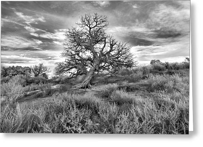 Devils Canyon Tree Greeting Card