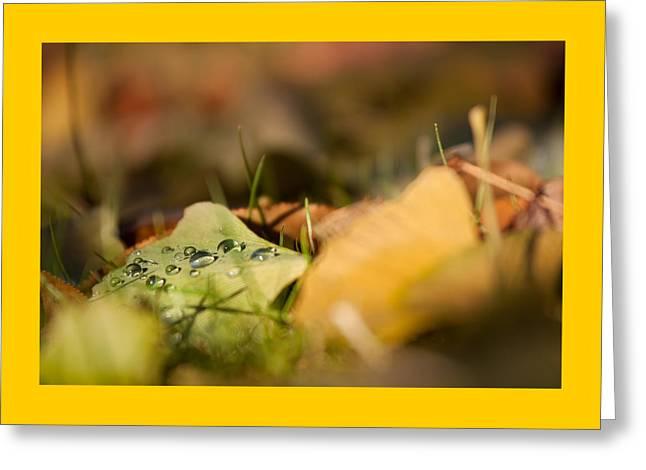 Dew And Gingko  Greeting Card by Bulik Elena