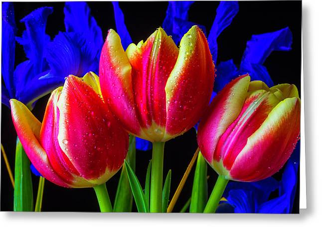 Dew Covered Tulips And Iris Greeting Card