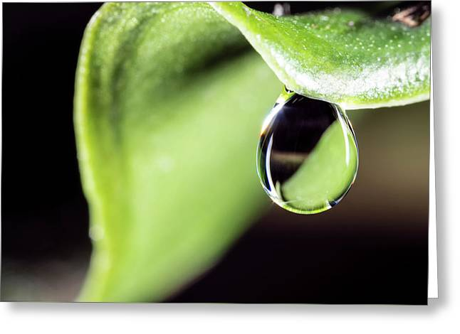 Dew Drop Greeting Card