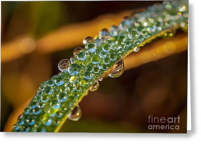 Dew Drop Reflection Greeting Card by Tom Claud