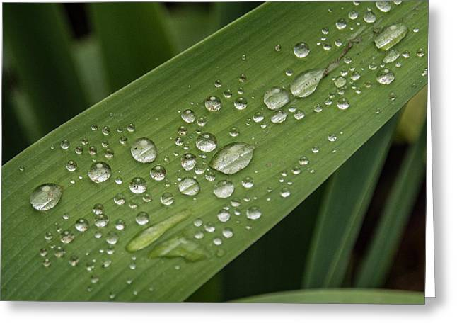 Greeting Card featuring the photograph Dew Drops On Leaf by Jean Noren
